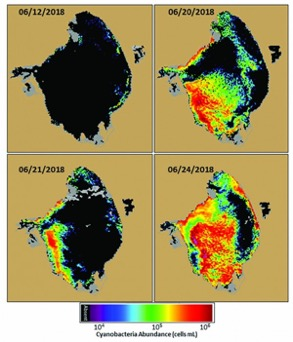 florida algae bloom map