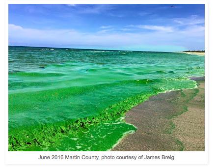 the growing problem of toxic blue green algae blooms cyanobacteria