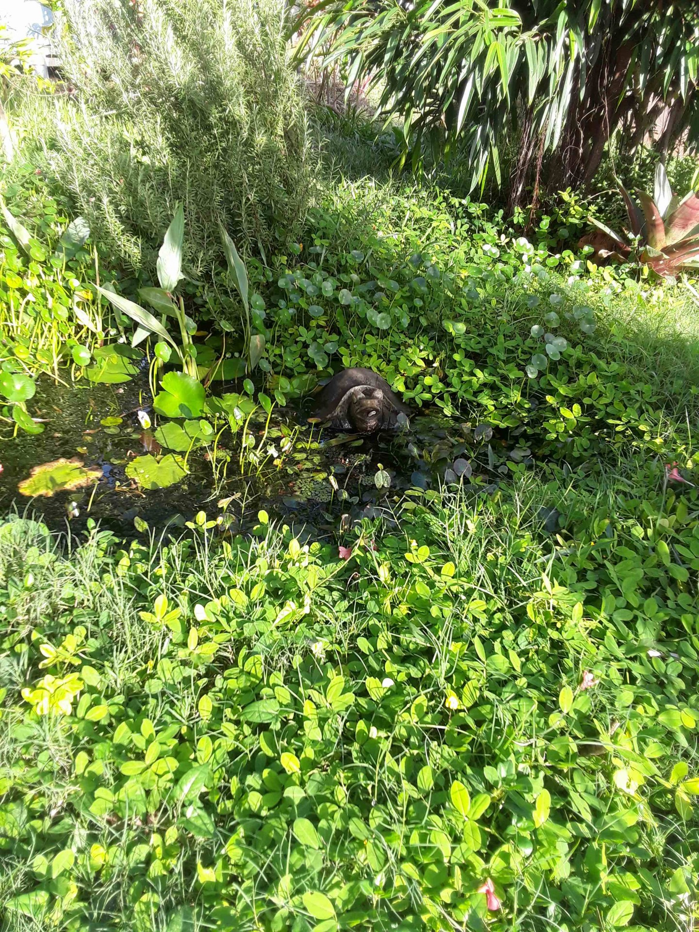 Ocean Friendly Gardens spreading across Kaua'i - Surfrider